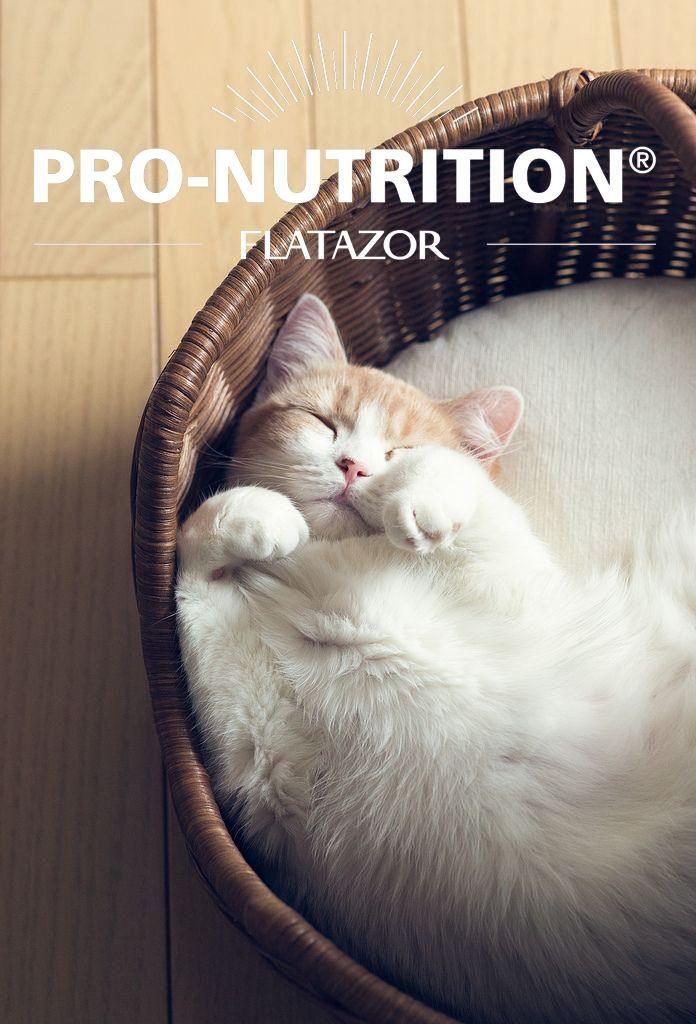 ogni #gatto #Tecnozoo adora le sue crocchette #Pronutrition #Flatazor