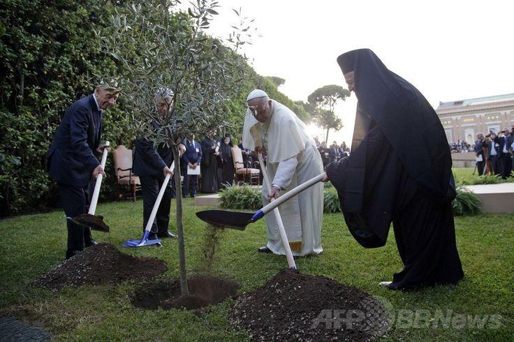 バチカン市国で、平和祈願の式典に出席した後、オリーブの木を植える(左から)イスラエルのシモン・ペレス(Shimon Peres)大統領、パレスチナ自治政府のマフムード・アッバス(Mahmud Abbas)議長、ローマ・カトリック教会のフランシスコ(Francis)法王、東方正教会のコンスタンチノープル総主教バルトロメオス1世(Bartholomew I、2014年6月8日撮影)。(c)AFP/MAX ROSSI ▼9Jun2014AFP|ローマ法王、イスラエル・パレスチナ両首脳と平和祈願 http://www.afpbb.com/articles/-/3017106 #Vatican #Pope_Francis #Papa_Francisco #Papa_Francesco #Shimon_Peres #Mahmud_Abbas