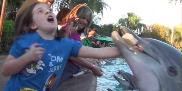 Hewan yang biasanya ramah dengan manusia ini tiba-tiba menggigit tangan gadis cilik di SeaWorld Orlando, Amerika Serikat (AS)Lumba-lumba di SeaWorld Gigit Gadis Kecil - INILAH.com