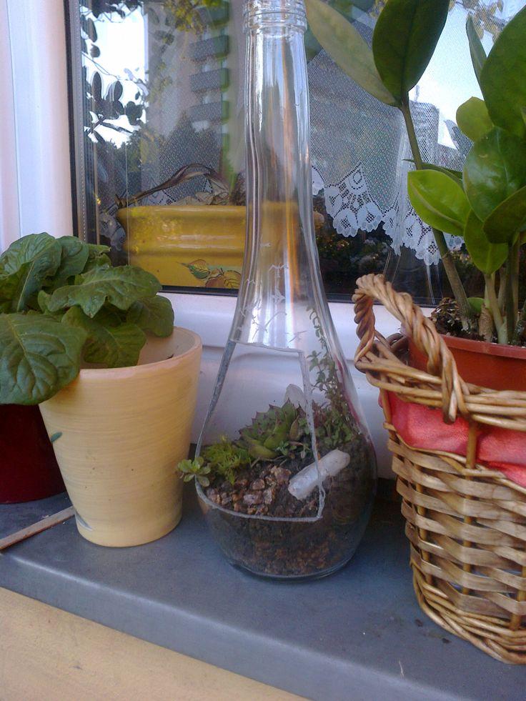 domácí mini zahrádka,sklenice od vína ,řezaný otvor a vyrytý obrázek pírka a letících ptáků ,osazeno rostlinkami ze zahrádky a nerostem