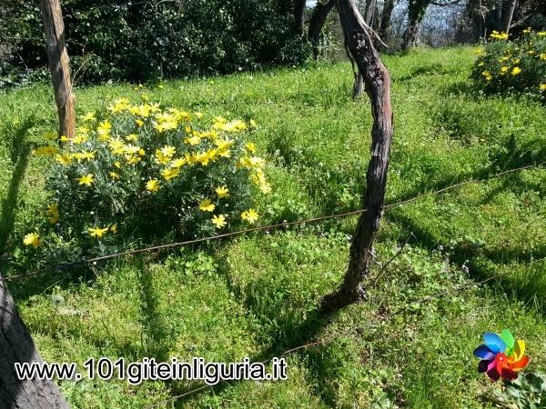 http://www.101giteinliguria.it/index.php/gite-in-autobus/1113-tra-daini-e-caprette-a-villa-duchessa-di-galliera