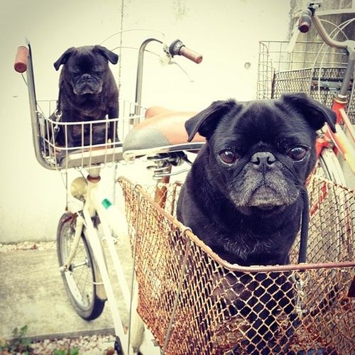 Hey, this bike doesn't pedal by itself!  Hop on and take us to the dog park!