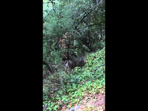 Deer Sisters (+playlist) Watch to the end of the video when Alexandra shows me exactly whose hillside it is!