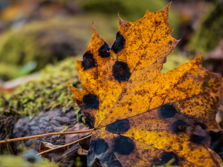 Autumn leaves by Bjorn Christian Finbraten on 500px 24x7photo.com, Norge, Norway, autumn, forest, green, leaf, leafs, leaves, nature, outdoors, woods, spots