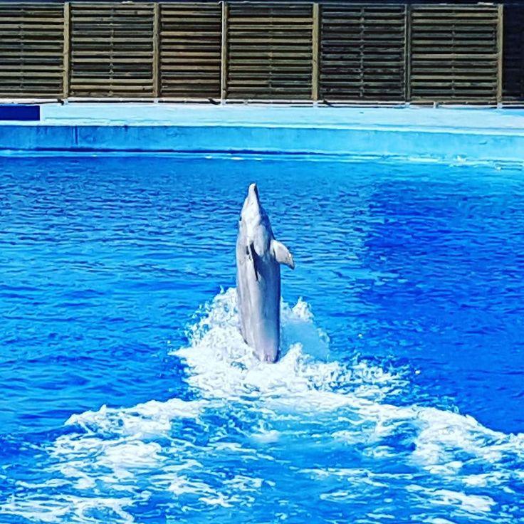 #Dancing#dolphin. #sea #blue #oceanografic #Valencia #Spain #españa