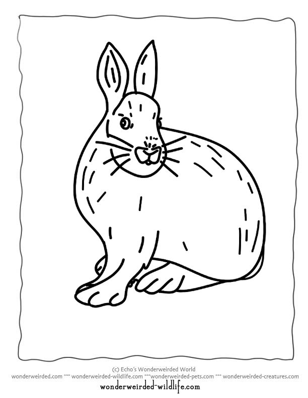 Printable Hare Coloring Pages From Arctic Page To Snowshoe Pictures Color Free Animal Sheets Featuring