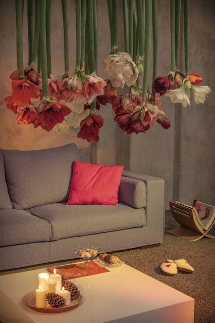 Be #inspired by the #amazing #Amaryllis.  Enjoy your day! RoyalColors.com