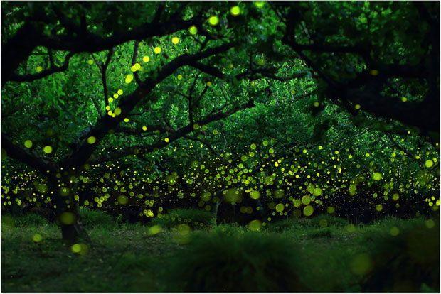 longue-exposition-des-paysages-japonais-illumines-par-le-voyage-des-lucioles41