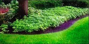 Choose Branch Lawn Solutions if you are looking for hardworking professionals who are well-versed in installing sod. They also offer tree removal, gutter cleaning, weeding, mowing and more. Get a free quote at Thumbtack.com.