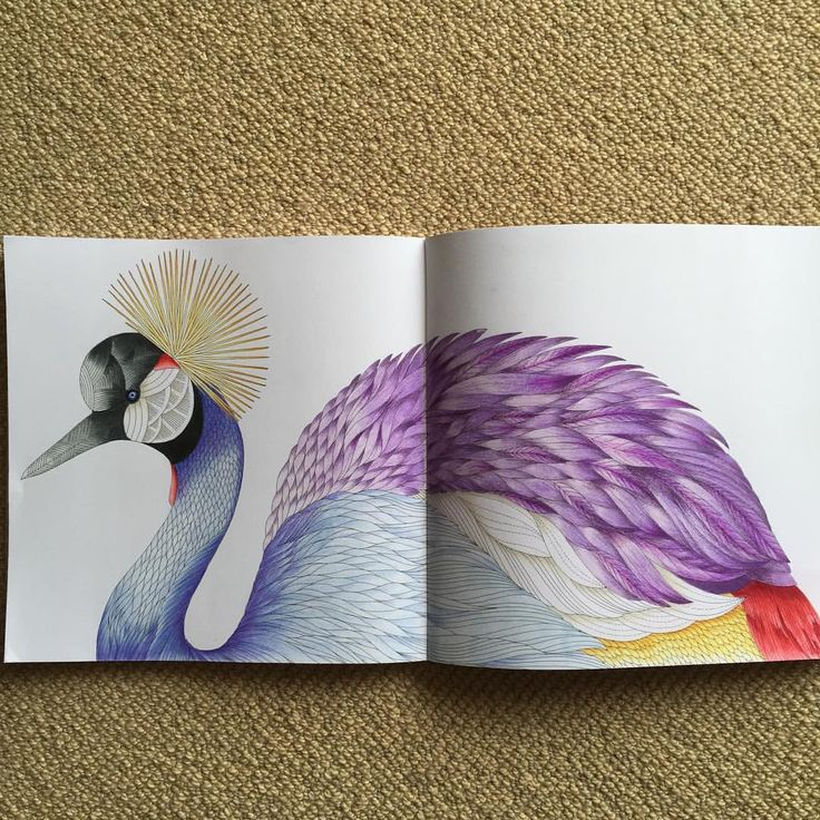 Its A Crowned Crane