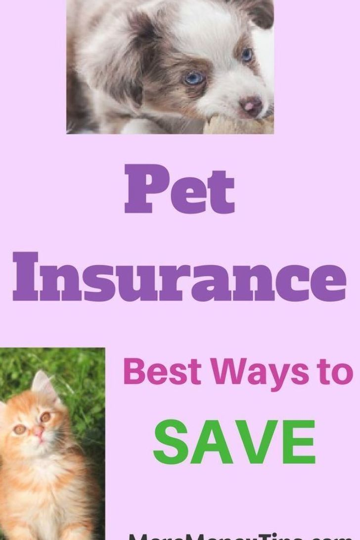 Real Life Case Studies To Guide You On Pet Insurance Helpful Advice And Web Links Provided For You To Make The Right In 2020 Pet Insurance Reviews Pet Insurance Pets