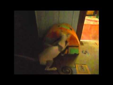 видео кошки Смотрите интересное видео видео кошки Смешное видео о кошках,видео про смешных животных.Самых смешных и прикольных животных. Любимые и смешные на...