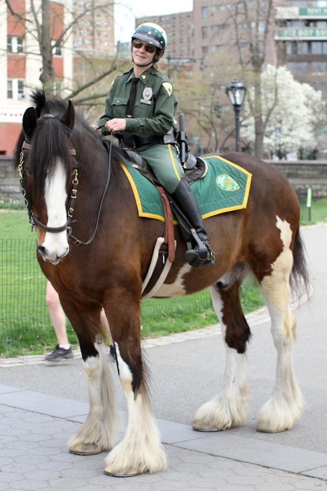 Mounted Police - I have always wanted to do crowd control on a horse that big.