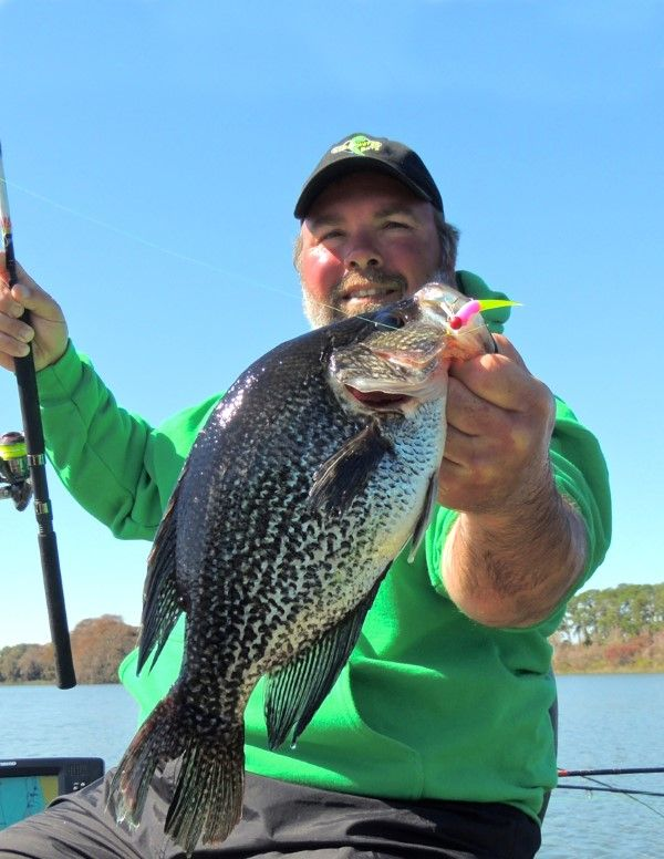 1000 ideas about crappie rigs on pinterest crappie for Crappie fishing secrets