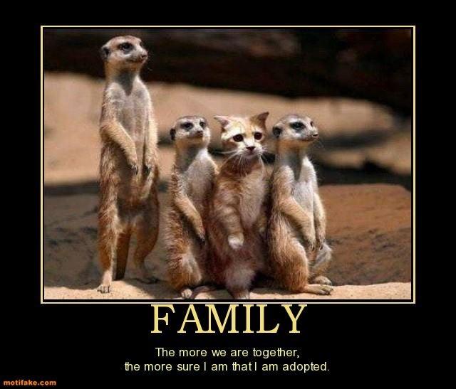 242 Best Meerkat Images On Pinterest