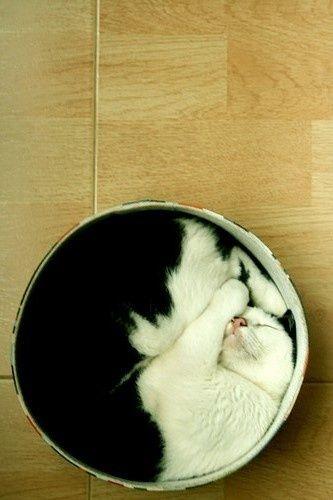 Otra forma de representar el Yin y Yang... ¡Feliz viernes! #YinyYang #gatoencaja #blancoynegro