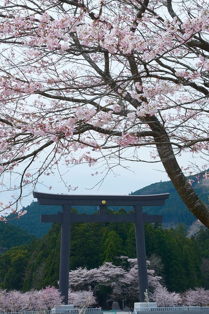 wakayama muslim Wakayama prefecture is particularly rich in temples and history introducing all types of halal and muslim friendly places and businesses in japan.