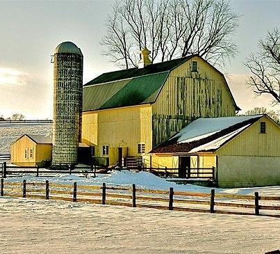 Beautiful yellow barns