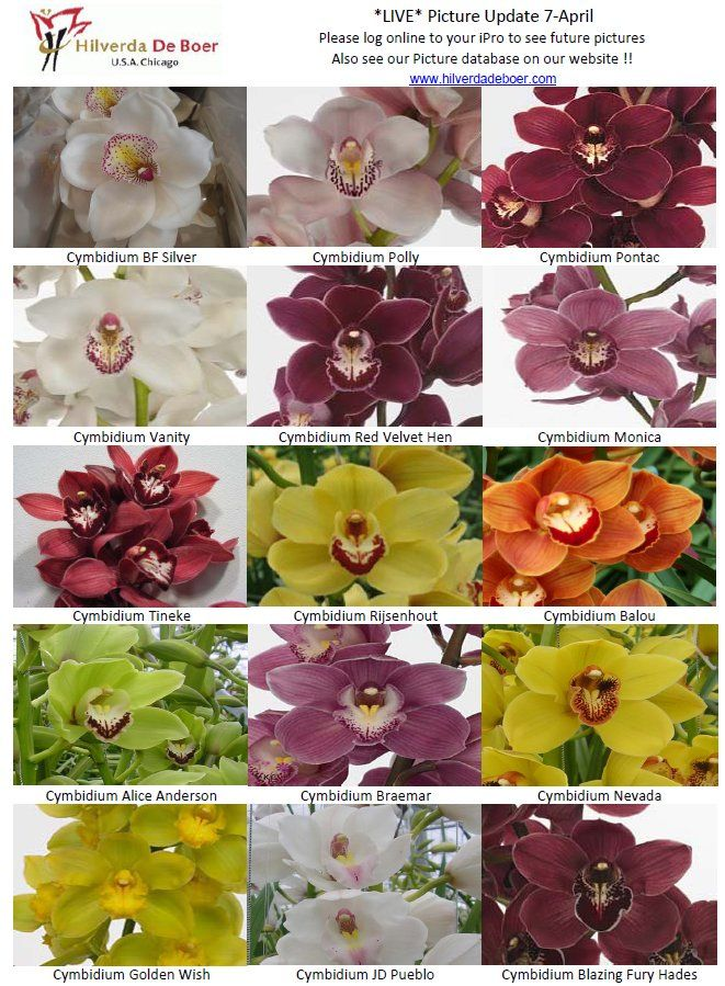 Cymbidium Orchids, variety of colors. This is the green flower on the cake pic that is already pinned.
