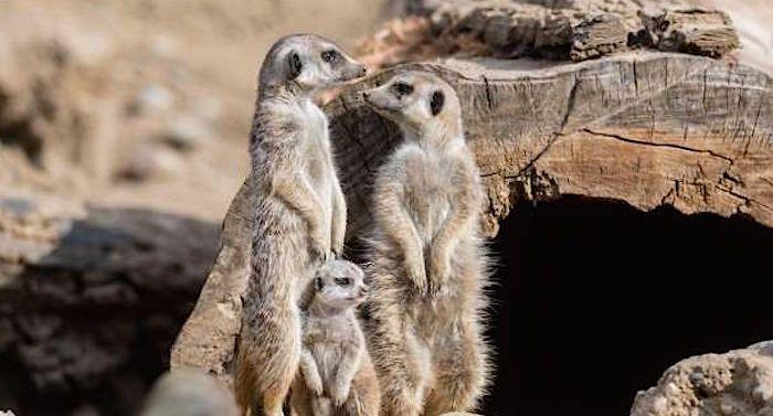 Zoo Basel Gutschein 2 Fur 1 Coupon Gutscheincode Rabatt Zoo Tierpark Hagenbeck Tierpark