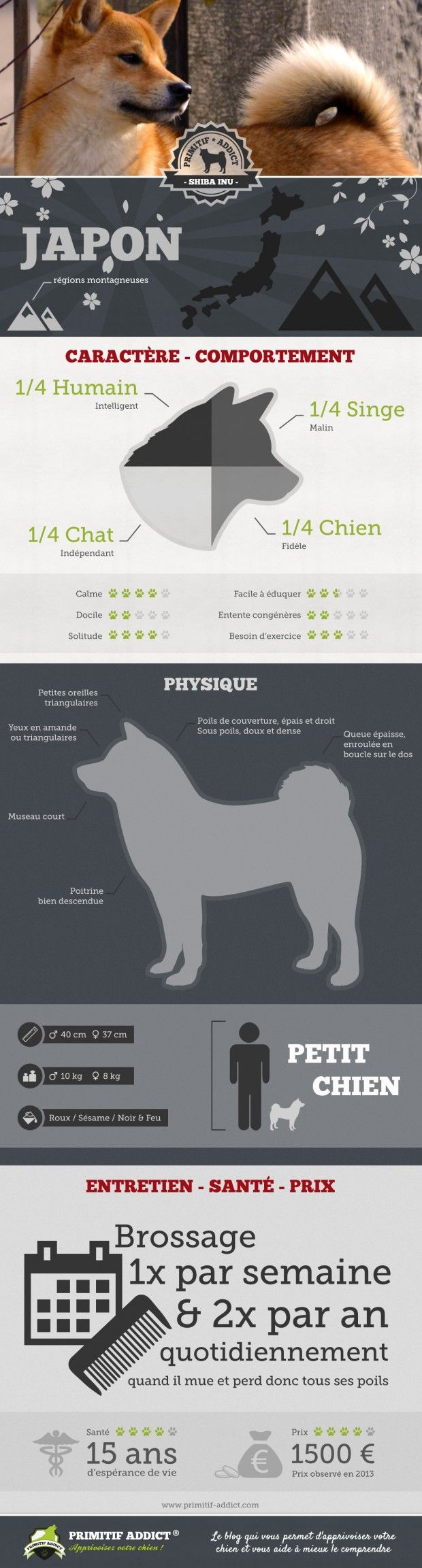 Primitif Addict | Zoom sur le Shiba Inu #shibainu #shiba #dog #pet #inu