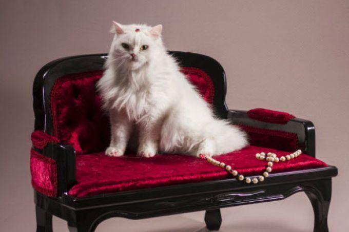 Morre Nikole, a gata mais famosa e queridinha do mundo da moda