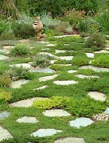 Walks Lawn Alternative And Lawn On Pinterest
