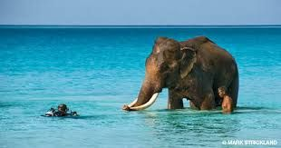 Have you heard of Elephant Beach on Havelock  Island in Andaman? This distant part of India is no less than heaven of water. Serene, secluded, calm and every such adjective is apt to describe this place!