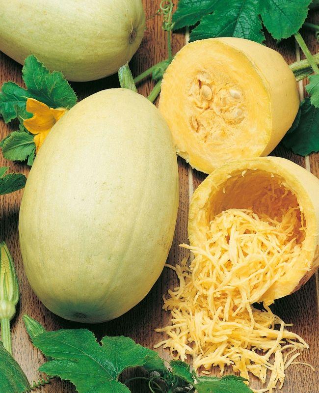 SPAGETTIPUMPA 'Vegetable Spaghetti' i gruppen Grönsaksväxter / Fruktgrönsaker / Pumpa/Vintersquash hos Impecta Fröhandel (9445)
