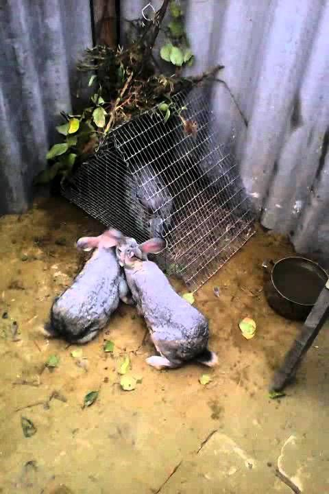 Кролики  Яма для кроликов 19