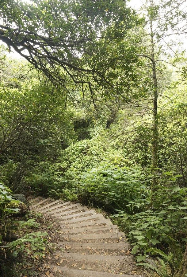 Muir Woods to Stinson Beach   California Hike