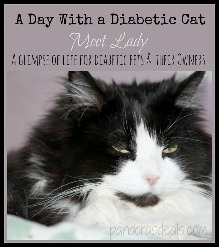 Make Your Own Cat Food For Diabetic Cats