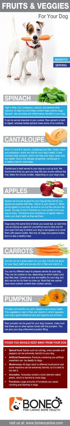 ♥ Dog Care Tips ♥  Dog infographic about healthy fruits and vegetables to give to your dog.