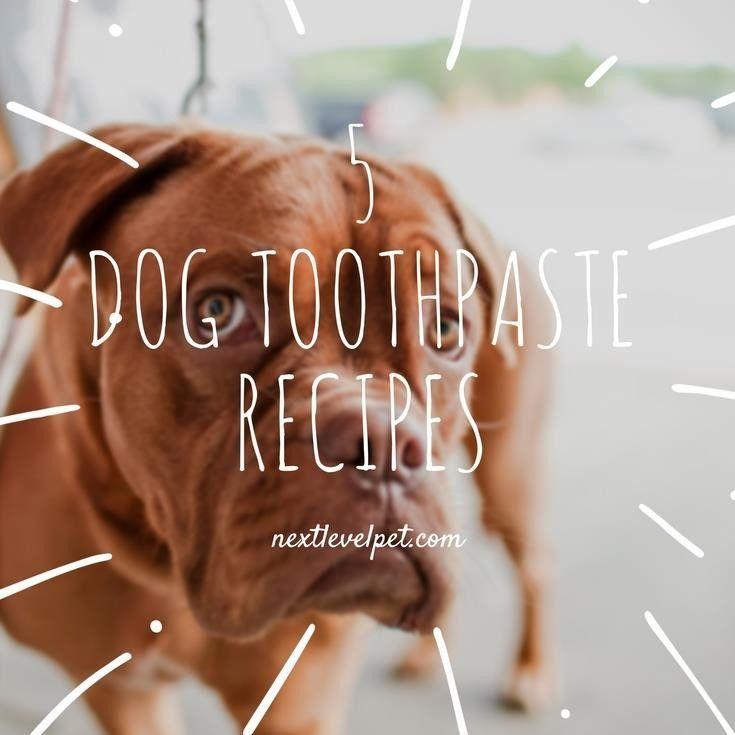 5 Homemade Dog Toothpaste Recipes