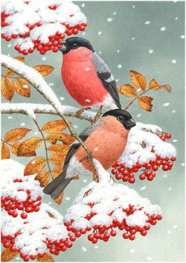 enl - Bullfinches