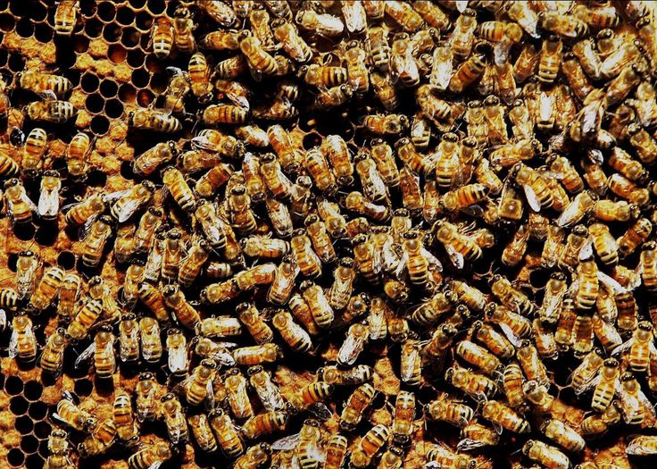 We are a nation of worker bees. We have been so for a long, long time. Worker bees spend their lives fulfilling their mission–doing anything and everything needed to serve the needs of the queen bee, the sustainer of life for the colony. Unlike nature's bee hive, where all worker bees are on the same …