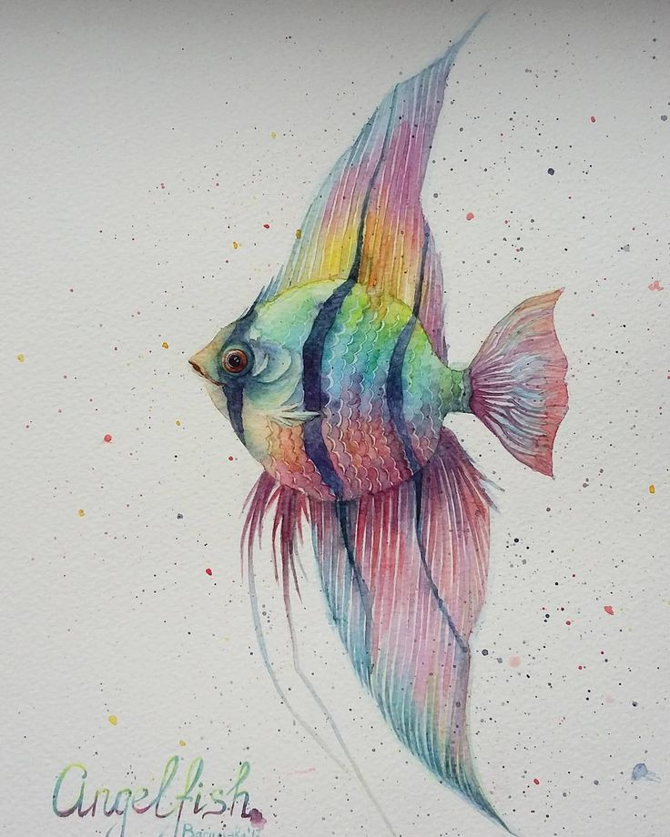 Angelfish by watercolor.  Валерия Васильева (@vvvasiljeva) в Instagram: «Рыбка для #морской_арт_марафон…»