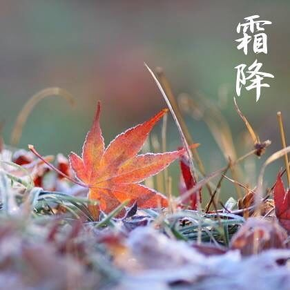 seimeijinja 明日10月23日は霜降(そうこう)、二十四節気のひとつです。  暦のうえでは、霜が降りはじめる頃となりました。 寒さで植物や車のフロントガラスなどに氷の結晶が付着し、朝の景色がうっすら白く感じられるようになります。  先週より京都もぐっと冷え込むようになりました。東北ではすでに紅葉は見頃に、関東でも色づきはじめているそうですね。京都でも各地でライトアップがはじまり、街もますます色づきはじめます。 ※台風が来ています。 くれぐれもご無理はなさいませんように。  #晴明神社 #京都 #二十四節気 #霜降  2017/10/22 05:03:50