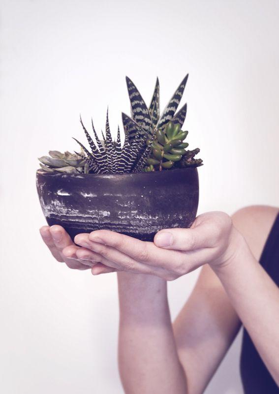 Large succulent pots by iamto'b