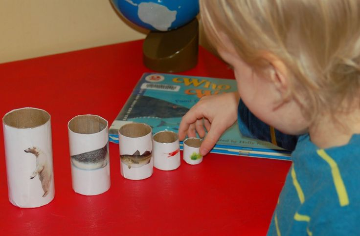 this simple food chain activity to illustrate the polar bear food chain: toilet paper rolls