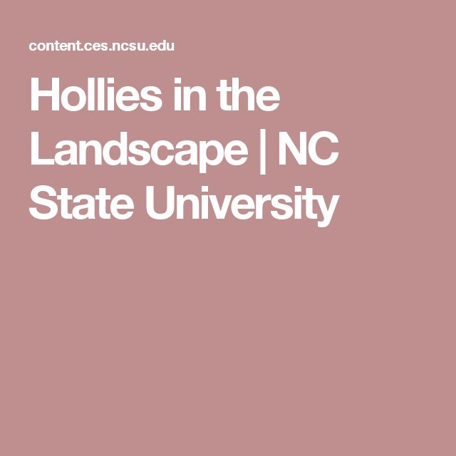 Hollies in the Landscape | NC State University