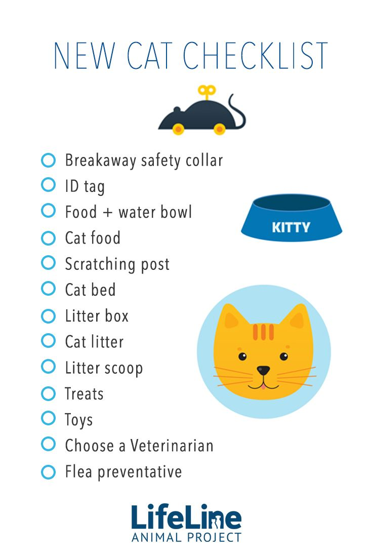 Be prepared when you bring home your new adopted cat with this handy checklist!