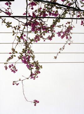 From 'Het lente eiland', Marco van Duyvendijk