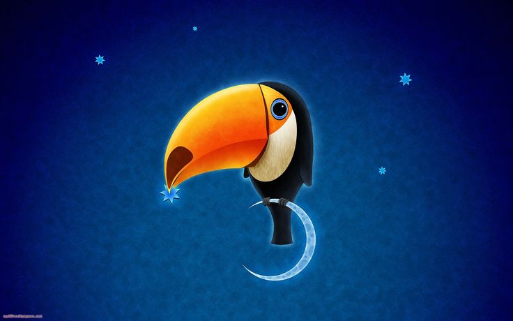 1920x1200 wallpaper images toco toucan