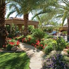 Landscape designer Peggy De La Garza says a mix-and-match approach to plant selection and placement was used in the backyard to combine desert vegetation with more tropical flora. Here, lantana and geraniums grow at the bases of Medjool date palms.