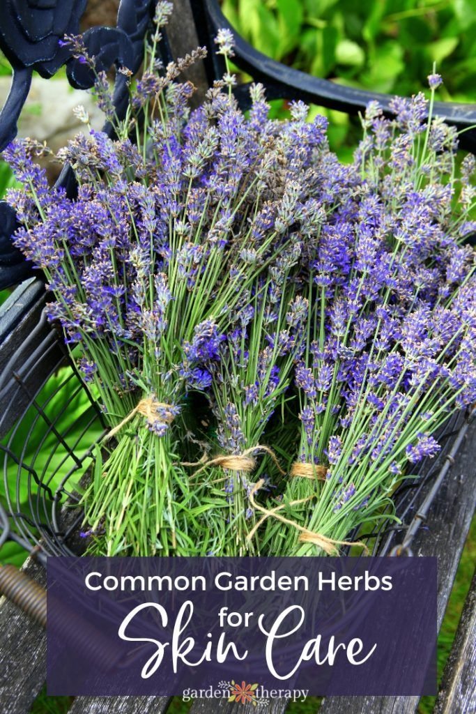 Common Garden Herbs For A Skin Care Apothecary English Lavender