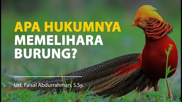 Fiqih: Apa Hukumnya Memelihara Burung? - Ustadz Faisal Abdurrahman, S.Sy.