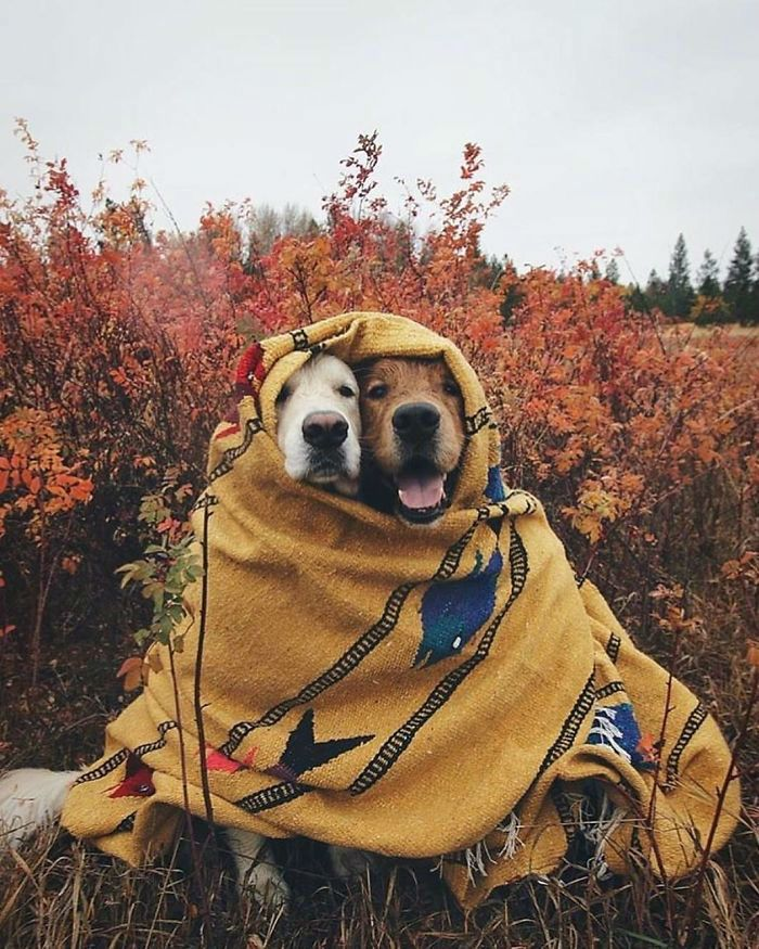 20 Pics From Project Van Life That Will Make You Quit Your Job And Start Nomad Life Immediately Animals Cute Dogs Cute Animals