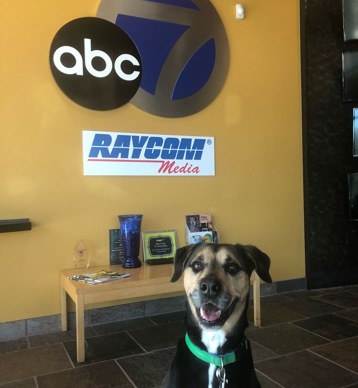 Did you catch Cato yesterday on the news? Cato and all our other big dogs are only $25 to adopt today! Its your last chance to get a Super Bowl buddy! #bishopspca #spca #bradenton #sarasota #SuperBowl #florida #philadelphiaeagles #eagles #newengland #newenglandpatriots #patriots #superbowlsunday #philadelphia #adoptable #mutt #mixedbreed #dog #dogsofinstagram #doggo #adoptdontshop #adopt #muttsofinstagram #lookingforahome #cato