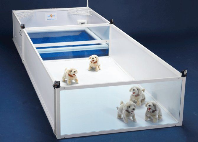 New Concept For Whelping Boxes Dog Room Ideas